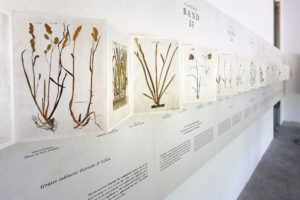 Felix Platters Herbarium – Ausstellung